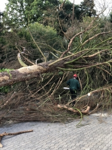 Risiko Baumumfall